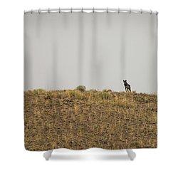 W31 Shower Curtain