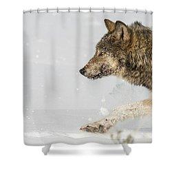 W36 Shower Curtain