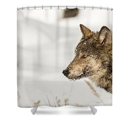 W37 Shower Curtain