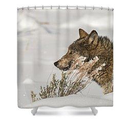 W39 Shower Curtain