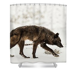 W44 Shower Curtain