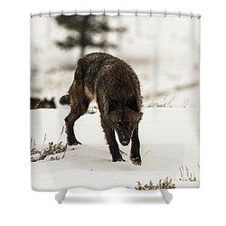 W45 Shower Curtain