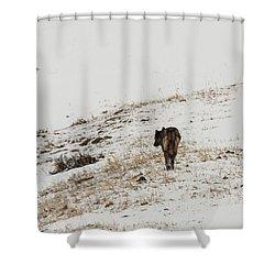 W52 Shower Curtain