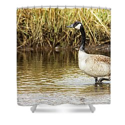 Wading Canada Goose Shower Curtain