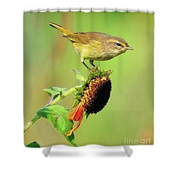 Shower Curtain featuring the photograph Warbler by Debbie Stahre