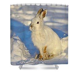 Warm Cold Shower Curtain