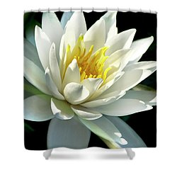 Shower Curtain featuring the photograph Water Lily by Christina Rollo