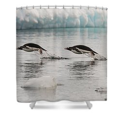 When Penguins Fly Shower Curtain