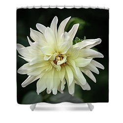 Shower Curtain featuring the photograph White Dahlia Beauty by Dale Kincaid