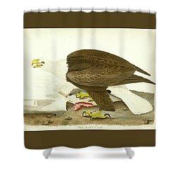 White-headed Eagle Shower Curtain