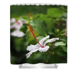 Shower Curtain featuring the photograph White Hibiscus Flower by Pablo Avanzini
