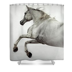 Shower Curtain featuring the photograph White Horse Rearing Up by Dimitar Hristov