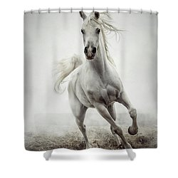 Shower Curtain featuring the photograph White Horse Running In Winter Mist by Dimitar Hristov