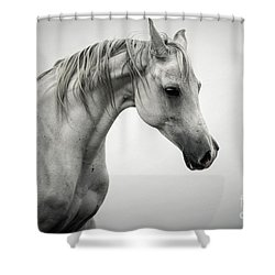 Shower Curtain featuring the photograph White Horse Winter Mist Portrait by Dimitar Hristov
