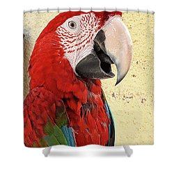 Who Is A Pretty Boy Then ? Shower Curtain