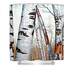Wild Birch Trees In The Forest Shower Curtain