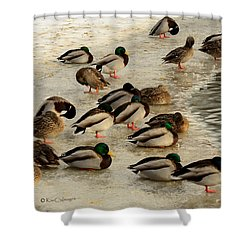Wild Ducks Resting On Ice Shower Curtain
