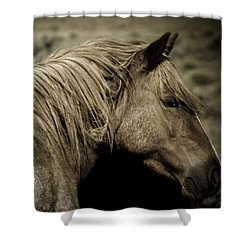 Wild Mustangs Of New Mexico 13  Shower Curtain