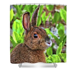 Shower Curtain featuring the photograph Wild Rabbit by Debbie Stahre