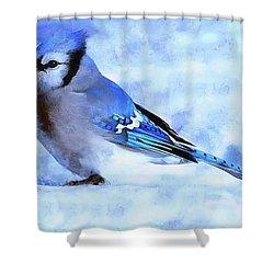 Winter Bluejay   ..digital Painting Shower Curtain