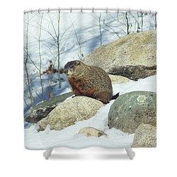 Winter Groundhog Shower Curtain