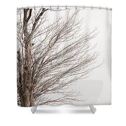 Winter Hoarfrost Shower Curtain