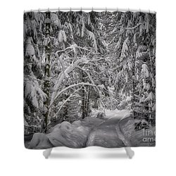 Shower Curtain featuring the photograph Winter In The Forest by Edmund Nagele