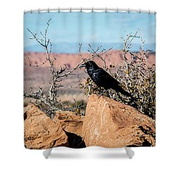 Shower Curtain featuring the photograph Black Raven by David Morefield