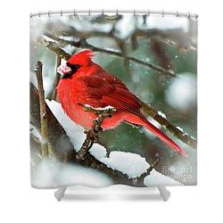 Winter Red Bird - Male Northern Cardinal With A Snow Beak Shower Curtain