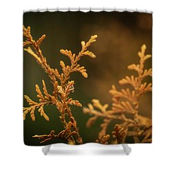 Winter's Hedges Shower Curtain