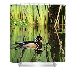 Wood Duck Reflection 1 Shower Curtain