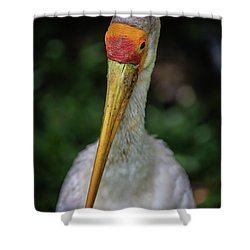 Yellow Billed Storks Shower Curtain