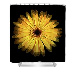 Shower Curtain featuring the photograph Yellow Gerbera Daisy Repetitions by Bill Swartwout Fine Art Photography