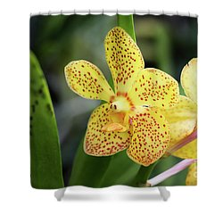 Yellow Spotted Orchids Shower Curtain