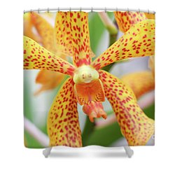Yellow Spotted Spider Orchids Shower Curtain