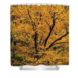 Yellow Tree Leaf Brilliance  Shower Curtain