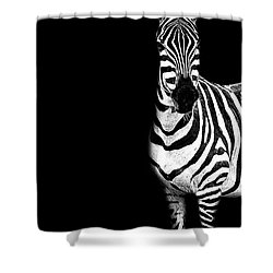 Shower Curtain featuring the photograph Zebra Drama by Kay Brewer