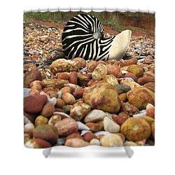 Zebra Nautilus Shell On Bauxite Beach Shower Curtain