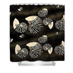 Zebra Pattern Nautilus Shells6 Shower Curtain