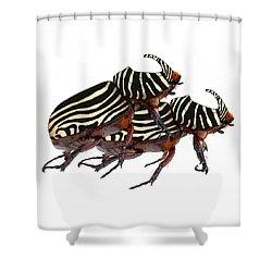 Zebra Pattern Rhinoceros Beetle 2 Shower Curtain