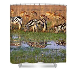 Zebras In Botswana Shower Curtain