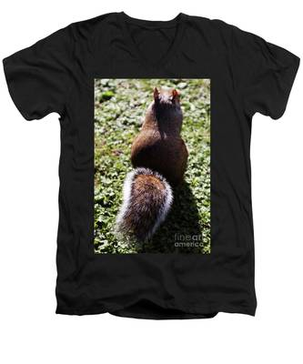 Squirrel S Back Men's V-Neck T-Shirt