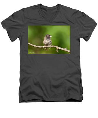 Dark Eyed Junco Men's V-Neck T-Shirt