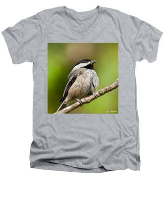 Black Capped Chickadee Singing Men's V-Neck T-Shirt