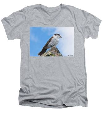 Gray Jay With Blue Sky Background Men's V-Neck T-Shirt