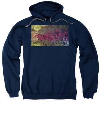 Spawning Kokanee Salmon Sweatshirt