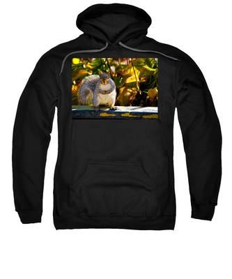 One Gray Squirrel Sweatshirt