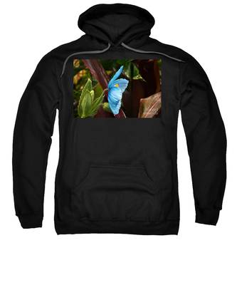 The Colors Of The Himalayan Blue Poppy Sweatshirt