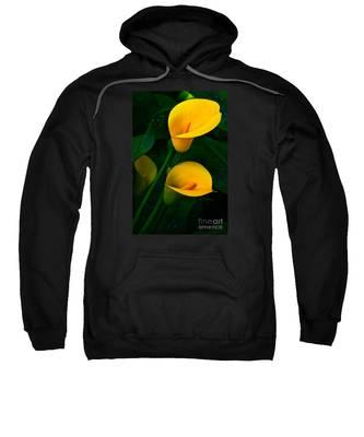 Yellow Calla Lilies Sweatshirt