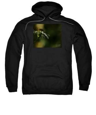 Aster's Peripheral Ray Sweatshirt